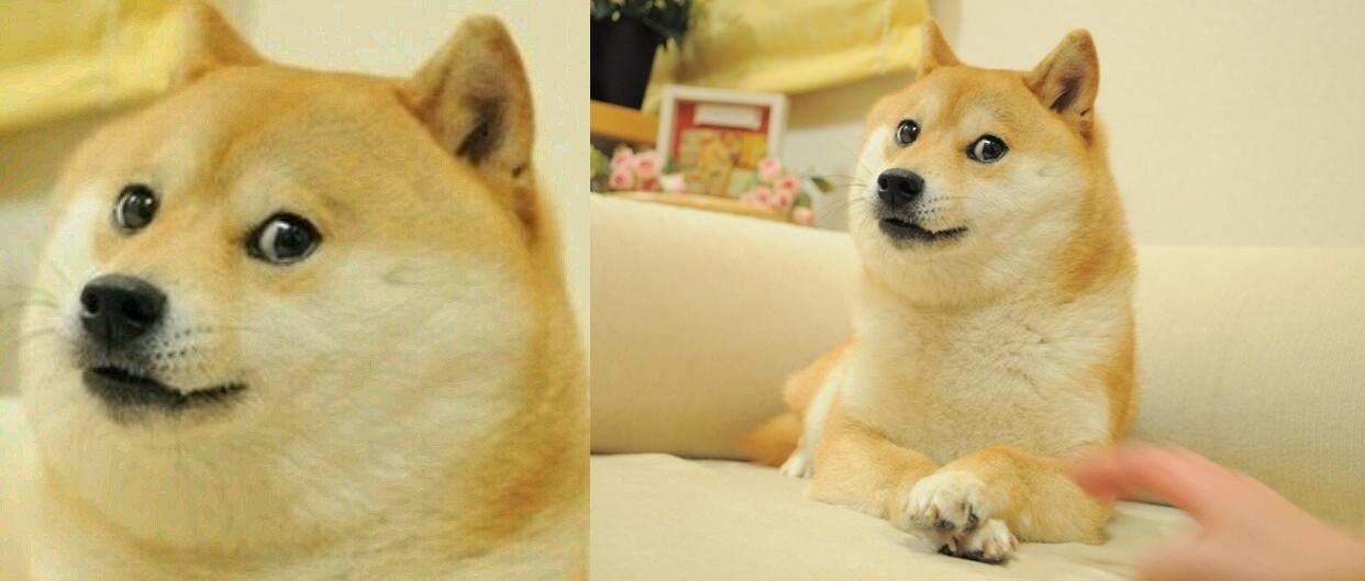 Le mème Doge (1), tel qu'il s'est propagé à partir de la photo originale (2). L'auteur de la photo a dû, devant sa prolifération, renoncer à ses droits d'auteur qui s'élèvent potentiellement à plusieurs milliards de dollars.